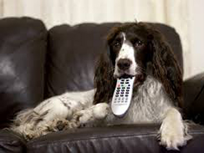 How to stop your remote control being chewed by dog or puppy